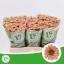 product/img.ozexport.nl/LCHRSANROSSAL-LIVE_fotos-0xD0443A16B4BEEB6E09A8EC8AC878F4FF60C2F275.jpg