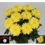 product/img.ozexport.nl/LCHRZEMY-LIVE_fotos-0xB8190393F1E6B30A3A97B490AD0D70C5215B7964.jpg