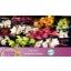 product/img.ozexport.nl/LCYM5-LIVE_fotos-0x7C27036353BB2AFC4CCDCB50CCB491997A76E91E.jpg