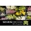 product/img.ozexport.nl/LCYM5-LIVE_fotos-0xF5C5B321B9B32082A8AE74506EDD5CCBCCB172C1.jpg