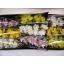 product/img.ozexport.nl/LCYM6-LIVE_fotos-0x3A5A945FA0DE76370C28DE9B78B3D17F6EB8239E.jpg