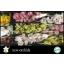product/img.ozexport.nl/LCYM6-LIVE_fotos-0x553331B0786C1D86A5527A32B49939C1B40F6899.jpg