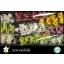 product/img.ozexport.nl/LCYM6-LIVE_fotos-0x9959BC8422FD4C23CA09727447111AACAB9B2286.jpg