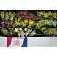 product/img.ozexport.nl/LCYM6-LIVE_fotos-0xD334BB6CD6E79C9EB90D664E86C1DC0CD5107484.jpg