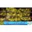product/img.ozexport.nl/LCYM6MINI-LIVE_fotos-0x6BC6645D4392662A5F5E493572A7FD12B3C10C73.jpg