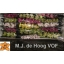 product/img.ozexport.nl/LCYMMI5-LIVE_fotos-0xE8CB549BA525C163E3E6AE97F605E8F771FF955F.jpg