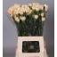 product/img.ozexport.nl/LDIAAPPT-LIVE_fotos-0x2808C54795C716C1FB9C369C1EB14026359EFDD7.jpg