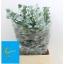 product/img.ozexport.nl/LEUCCIN7-LIVE_fotos-0x5C23864AC720FF6762EAF3DAF2895667E126E17E.jpg