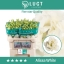 product/img.ozexport.nl/LEUSALW-ASSORTI_fotos-MVA-Alissa White 1.jpg