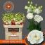 product/img.ozexport.nl/LEUSALW-LIVE_fotos-0xF0F5EDD39D6A6E271E28C4EC0E32DC2395182FB1.jpg