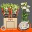 product/img.ozexport.nl/LEUSCELW-LIVE_fotos-0x472A5017A76E15A7F53D83AB0723114B547D568F.jpg
