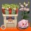 product/img.ozexport.nl/LEUSCOLP-LIVE_fotos-0x9FE09C82ECF48D81521EFE90FCA5BA3B020B3FAC.jpg