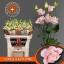 product/img.ozexport.nl/LEUSCOLP-LIVE_fotos-0xD44D04DE02A4A28DA413924CA6503546E09DE7BC.jpg