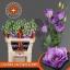 product/img.ozexport.nl/LEUSCROLAV-LIVE_fotos-0xCBD071D8EFF36FCC4B27360832847C3B82C10E1A.jpg