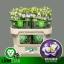 product/img.ozexport.nl/LEUSEXBLUP-LIVE_fotos-0x1848D9CA15D04337AED1B5700F16D33D9CFB10AD.jpg