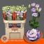 product/img.ozexport.nl/LEUSEXBLUP-LIVE_fotos-0xB4EA362914A77B5E3821F8404952A61323057EE1.jpg
