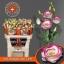 product/img.ozexport.nl/LEUSEXHOL-LIVE_fotos-0x12A2B8CE40C500DC47DB03BC44DF51897A464DC8.jpg