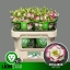 product/img.ozexport.nl/LEUSEXHOL-LIVE_fotos-0xD811C86523400CC6DD56DBC679C54B8D7D5A2823.jpg