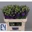 product/img.ozexport.nl/LEUSROBLU-LIVE_fotos-0xC844E2A9A1A472639BEBA8138C9DFA9910E42840.jpg