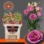 product/img.ozexport.nl/LEUSROROP-LIVE_fotos-0x548F1AA46A8F5C2B4193AA19DEAC836CEDC42BAB.jpg