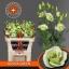 product/img.ozexport.nl/LEUSROSIG-LIVE_fotos-0x253A651EB5207F04A313868330309FFDF2F657B4.jpg