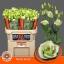 product/img.ozexport.nl/LEUSROSIG-LIVE_fotos-0x6ECFB0F554C2754DE70407172DC2B31DE2DA2170.jpg