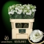 product/img.ozexport.nl/LEUSROW-ASSORTI_fotos-MVA-Lisianthus du rosita white - Samada.jpg