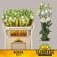 product/img.ozexport.nl/LEUSROW-ASSORTI_fotos-MVA-Sunrise - Lisianthus Rosita White.jpg