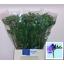 product/img.ozexport.nl/LFREDELR-LIVE_fotos-0x19D427C2A0D581DBF28CE009287935E4F1C4C164.jpg
