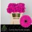 product/img.ozexport.nl/LGERMANN-LIVE_fotos-0xF041369D01BDA01EB438CA62C5A567ABCB1CB237.jpg