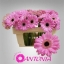 product/img.ozexport.nl/LGERMBEN-LIVE_fotos-0x5513C3E9AE3BBD56894236660414D32B15A10453.jpg