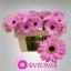 product/img.ozexport.nl/LGERMBEN-LIVE_fotos-0xC4F7E608B05945108E68B0A6060FB259CA755F69.jpg
