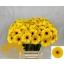 product/img.ozexport.nl/LGERMBRA-LIVE_fotos-0xB351CEC29CA9ADFAAE157AE1A5548B9E9E4530AF.jpg