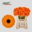 product/img.ozexport.nl/LGERMNAC-LIVE_fotos-0x2C8A016312660C8421415780B0C1FE1C271F965E.jpg