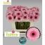 product/img.ozexport.nl/LGERMPET-LIVE_fotos-0xCCE962E0173AFF3CDA46EC76D1F53F28CA5BE0AE.jpg