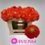 product/img.ozexport.nl/LGERMPOMVID-LIVE_fotos-0xA835317DEBD852E30F77D05677F02F3451A72199.jpg