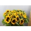 product/img.ozexport.nl/LHELSUNOR8-LIVE_fotos-0xD7D1400E392A13C998C20B5D15E45120F63CE7E7.jpg