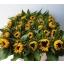 product/img.ozexport.nl/LHELSUNOR8-LIVE_fotos-0xE487911522DADB53A37358F11FD45E855B038200.jpg