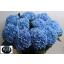 product/img.ozexport.nl/LHORHILMB8-LIVE_fotos-0xC93734875387204C2F37156E834259B78CD45211.jpg