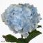 product/img.ozexport.nl/LHORVERB8-ART_fotos-VBN100000-vbn107787.jpg