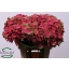 product/img.ozexport.nl/LHYDMAGGR6-LIVE_fotos-0x0CD820D694BC1E1E971239F17ABC875341D525EB.jpg