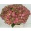 product/img.ozexport.nl/LHYDMAGGR6-LIVE_fotos-0x26F2BF60C9DE2861B7CC6F4F90DE0BE3C38A6375.jpg