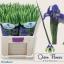 product/img.ozexport.nl/LIIRPROFB-LIVE_fotos-0x46A5D1A53EC13BC74592CB98015A2881CC464FAD.jpg