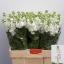 product/img.ozexport.nl/LLEVAIDW-LIVE_fotos-0x2E7844AD5B7DEA11F05116DBAD762316EA696F5A.jpg