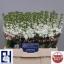 product/img.ozexport.nl/LLEVAIDW-LIVE_fotos-0x6F01B2B143DAF57CCCDE98C3FAF3214AFEED9B94.jpg