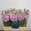 product/img.ozexport.nl/LLEVMATP-LIVE_fotos-0x05B3740A094EEFCFDD6320BC69FA579BF39D309C.jpg