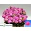 product/img.ozexport.nl/LPOJDRALF6-LIVE_fotos-0x9DA601805DEB9A08B78CDDFD30E147802AEEB527.jpg