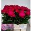 product/img.ozexport.nl/LPOJKARR5-LIVE_fotos-0xF7B06CCF2AD7B51047B1308D4961C64F21F327DD.jpg