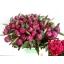 product/img.ozexport.nl/LPOJREDSARB55-LIVE_fotos-0x9535D34544F8CCE59A9022BFECD946B7B9C97C98.jpg