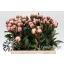 product/img.ozexport.nl/LPOJSARB5-LIVE_fotos-Partijfoto-00035935251.jpg